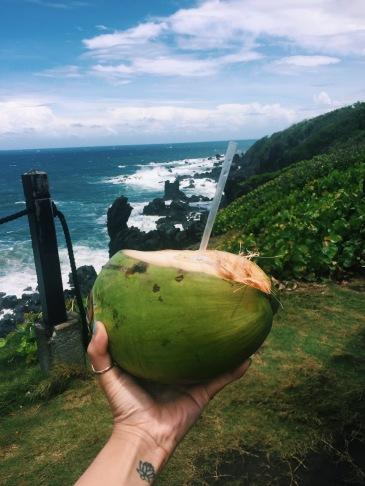 Coconuts in St. Kitt's